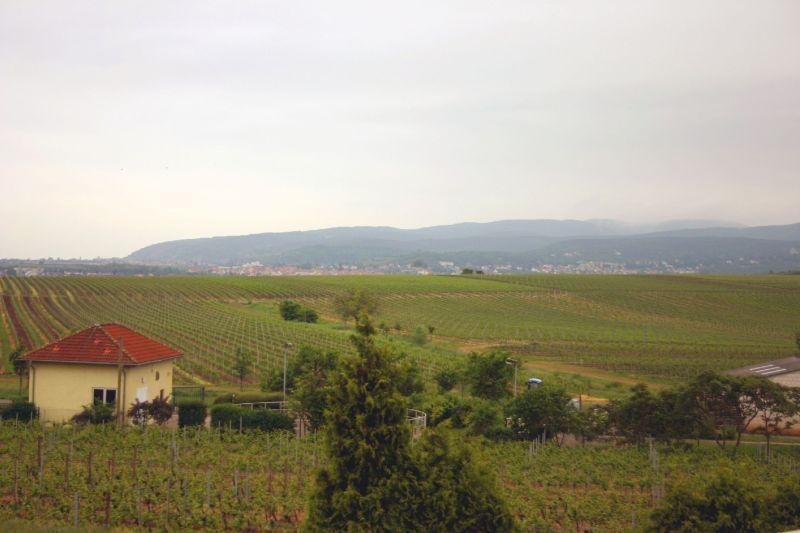 WeingutHorcher2
