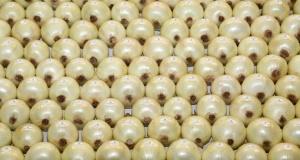 weiter Zwiebel-Horizont - Die Zwiebel – eine der ältesten Kulturpflanzen