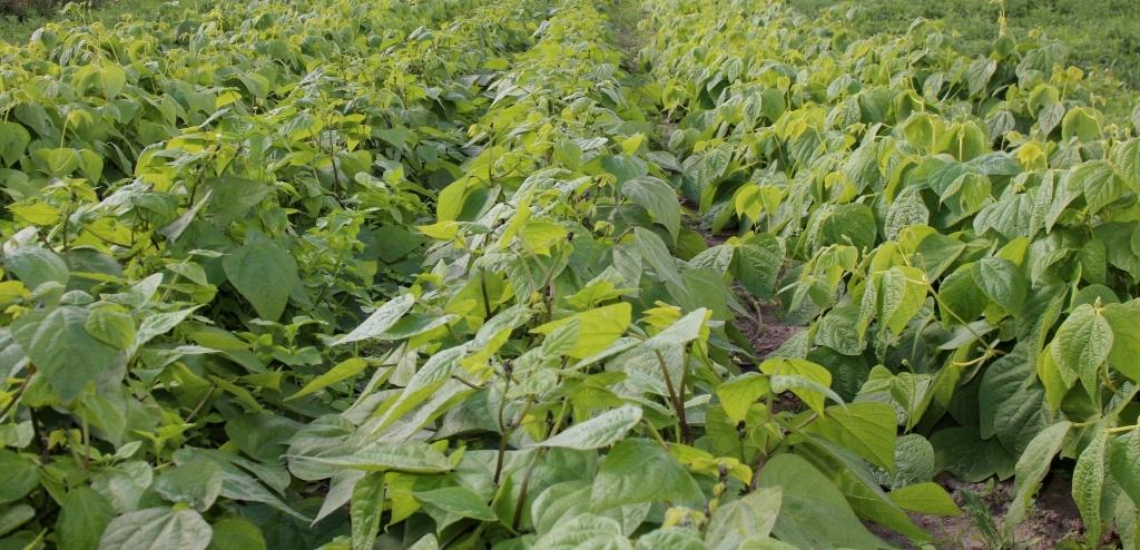 Steph Kratzsch Feld altes Gemüse