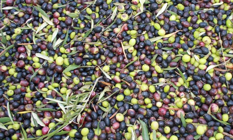 Italien Oliven